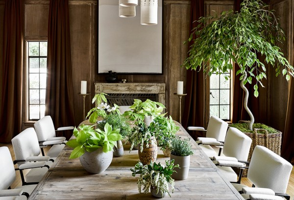 Focus on: Houseplants