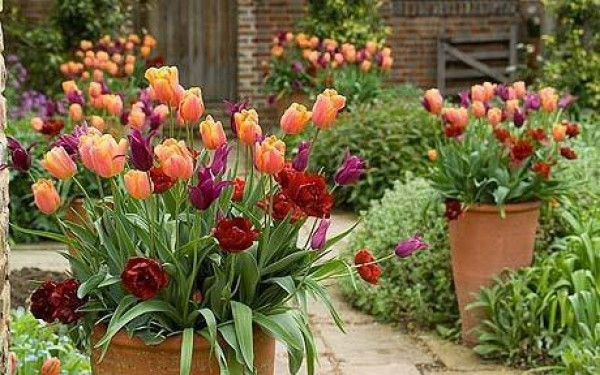 Plant Bulbs for Spring Colour